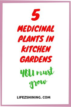 Medicinal plants in kitchen gardens you must grow because they are effective medicines too turmeric ginger curry leaf moringa plants pepper etc read Curry Leaf Plant, Turmeric Plant, Ginger Plant, Black Pepper Plant, Pepper Plants, Remedies For Nausea, Herbal Remedies, Growing Roses, Growing Tree