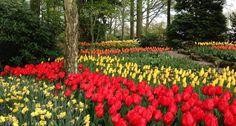 Keukenhof, o jardim das tulipas na Holanda