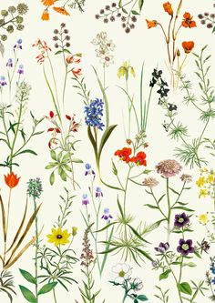 Botanical floral Vintage Print - Art poster Wall art home decor - plants antique…