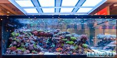 Aquarium Design, Aquarium Ideas, Reef Tanks, Fish Tanks, Marine Aquarium, Reef Aquarium, Saltwater Tank, Saltwater Aquarium, Marine Tank