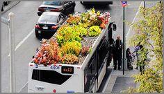WOW! technically outdoor gardening but still...anneliese@designereco.com