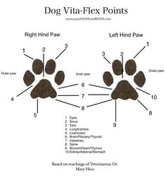 Young Living Essential Oils: The Vita Flex Points for Dog Paws