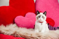 Feel the feline love! These cute kitties are celebrating Valentine's Day right- check out these photos! http://www.pawsforreaction.com/photos-valentine-cats.html