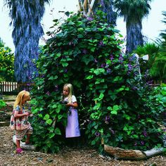 How to create a vine-covered tepee