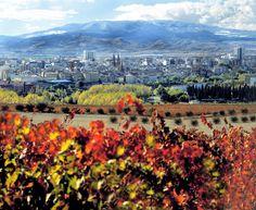 """El Instituto Master of Wine (Maestros del vino) lanza el Simposio """"Living Wine"""" - Vinummedia"""