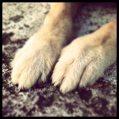 Big feet! Bigfoot, Animals, Animales, Animaux, Animal, Animais