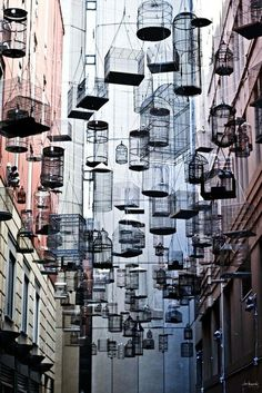 Sydney Australia :  Michael Thomas Hill created Forgotten Songs, an installation of 110 empty birdcages suspended high in the air that play the songs of fifty birds that once lived in central Sydney before they were forced out by European settlement. #streetart
