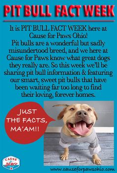 We're talking about pit bulls here at Cause for Paws Ohio this week!