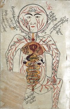 illustration/painting from Canon of medicine (https://pinterest.com/pin/287386019945013982), Avicenna (https://pinterest.com/pin/287386019945306035).