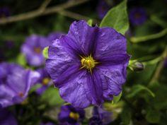 https://flic.kr/p/xQv9ev | Tenha um dia feliz! | Feliz Quinta-Flower