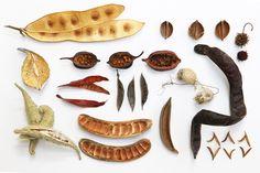 seedpods from stillbog