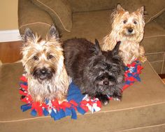 Col. Potter Cairn Rescue Network: Sunday Sweets