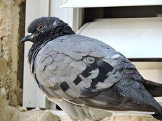 Pigeon Photo by Shalva Mamistvalov — National Geographic Your Shot