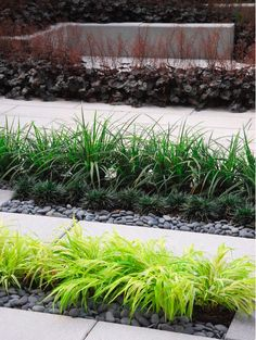 Grasses plugs and monkey on pinterest for Ornamental grasses that stay green all year