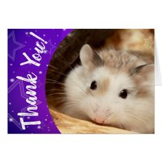 Hammyville - Cute Hamster Thank You Card - fun gifts funny diy customize personal Custom Thank You Cards, Thank You Gifts, Cute Hamsters, Cards For Friends, Egg Shells, Cool Gifts, Smudging, Paper Texture, Personalized Gifts