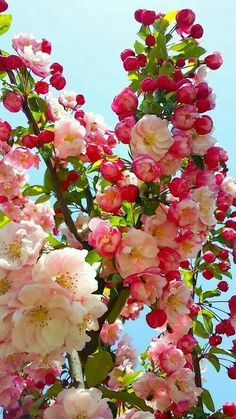 All About Amazing Flowers Amazing Flowers, Pretty Flowers, Colorful Flowers, Spring Flowers, Apple Flowers, Exotic Flowers, Spring Blossom, Flower Blossom, Flowering Trees