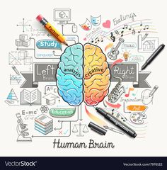 Illustration of Human brain diagram doodles icons style. vector art, clipart and stock vectors. Mind Map Art, Mind Maps, Human Brain Diagram, Mind Map Design, Brain Illustration, Brain Art, Doodle Icon, Doodles, Right Brain