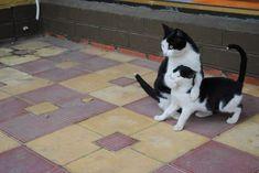 #cats Be Quiet