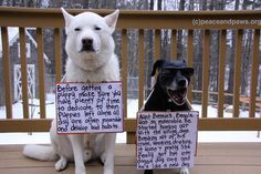 (from Giddy & Twinkle, Courtesy of Peace and Paws Rescue) Funny! All Dogs, I Love Dogs, Puppy Love, Cute Dogs, Paws Rescue, Street Dogs, Dog Shaming, Training Your Dog, My Animal