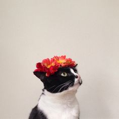 Bridesmaids gonna be jelly - flower crown - floral - corona de flores - gato - chat - cat