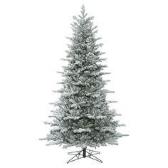 foot 7.5  Frosted Eastern Frasier Fir Tree: Unlit