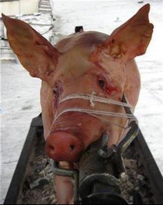 This is so wrong! Please stop eating meat, wearing leather etc etc! How can you be ok with this?!