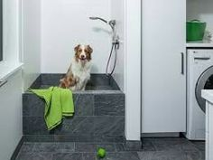 Indoor dog washing station glass door for when the dog shakes the white and gray contemporary laundry room boasts dark gray floor tiles leading to a matching a dark gray tiled dog bath framed by white surround tiles solutioingenieria Gallery