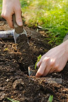 We are planting wee seedlings today and then we'll learn that you can use most anything as a planter and how to use pots around and in the garden for color.......