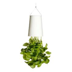 Boskke Sky Planters Sky Planter hangs from ceiling $25.00 Extra Small