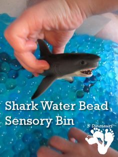 Shark Water Bead Sensory Bin ~ Perfect sensory idea for Shark Week!