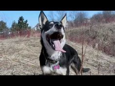Rescue Dogs Rock Music Video- Talent Hounds