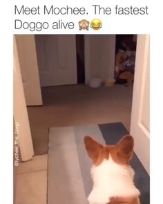 Mochee is the fastest dog alive. Until he crashes and burned. Darn it Mochee..