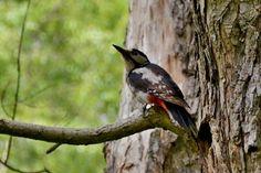 NAŠE ZAHRADY: Život v přírodě. Ptáci. Deset zajímavých minipříbě...