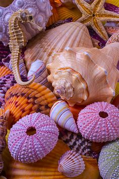 Special Shells by Garry Gay - РАКУШКИ - Ocean Wallpaper, Summer Wallpaper, Colorful Wallpaper, Wallpaper Backgrounds, Iphone Wallpaper, Fond Design, Orange Aesthetic, Shell Beach, Ocean Creatures