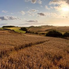 This beautiful photo was taken at sunset by Paul our greenkeeper on the Waitrose Leckford Farm. The wheat crops in the photo are used to make flour and bread.  #Farming #Leckford #Sunset #Waitrose