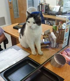 charlie cat missing two weeks travels home on train off right stop