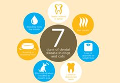 Note the 7 Signs of Dental Disease in Cats and Dogs