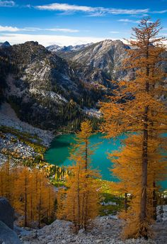 ✯ Larch trees at Colchuck Lake in the Enchantment Lakes wilderness area of Washington state