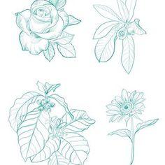 CAMPAÑA FLORES PARA EL SUR 🌸🌱Estoy ofreciendo estos diseños de flores chilenas, para donar lo recolectado en ayuda de nuestros hermanos…