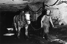 Last Pit Pony, Collinsville, Queensland, 1986 As tunnels increased in length, miners employed 'pit ponies' to carry the coal over great distances. Here, a donkey is guided in Collinsville, Queensland.