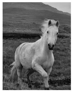 Photography Horse 8 x 10 Fine Art Nature by theheartoftheeye