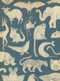 :: katie-scott: Mammals wallpaper in Animalium ::Brill use of pos & neg space Motifs Textiles, Textile Patterns, Print Patterns, Animal Wallpaper, Of Wallpaper, Pattern Wallpaper, Pattern Art, Pattern Design, Fractal