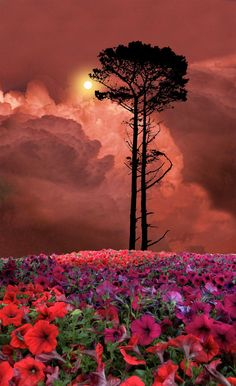 """500px / Photo """"2328"""" by peter holme iii"""