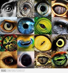 I find these photographs to be rather interesting because of the use of variation and if I was to try this for myself then I would maybe try experimenting with with just having one animal eye with a comparison of a human eye next to it. Beautiful Creatures, Animals Beautiful, Realistic Eye Drawing, Fotografia Macro, Human Eye, Tier Fotos, Mundo Animal, Eye Art, Art Plastique