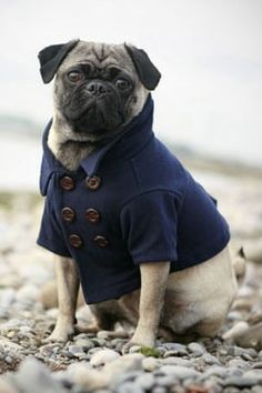 :) hilariously cute! He's even got a popped collar!