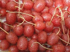 Goumi BerriesThis is a great list of unusual fruit to grow. #spon #gardening