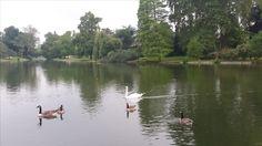 Lac Daumesnil * Canada geese & a Mute swan