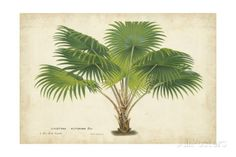 Palm of the Tropics V Art Print