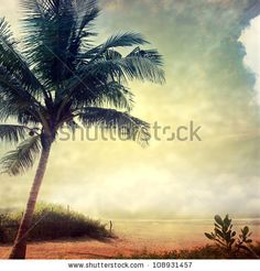 Palm Paradise Night Is Coming Foto Stock 208279156 : Shutterstock