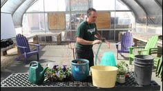 Using an Olla to Help Pansies Survive Summer Heat